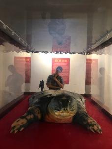 Hoan Kiem Lake turtle - Hanoi