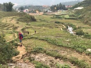 Sapa rice fields - Vietnam